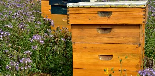 beehive-3703426__340